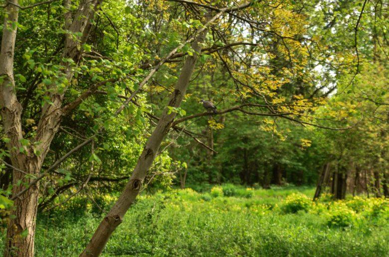Paprociowy Las w Krakowie
