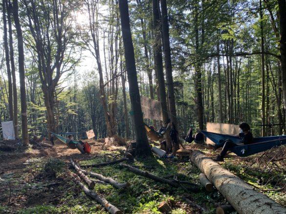 Pokojowy protest w obronie bieszczadzkich lasów